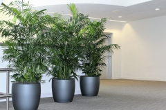 Bamboo-wall-Commercial building interior plants.