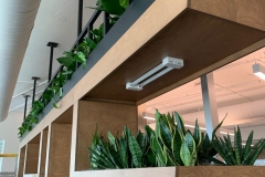 Custom-wall-planter-office-wall-plants-plant-lease-plant-rental-plant-design-e1565361803346