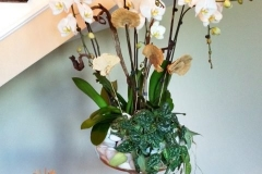 Entry-Orchids