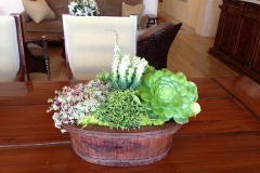 Succulents table top