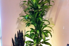 Office plants with back lighting