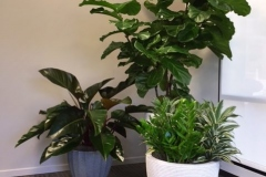 Office-plant-grouping-modern-design