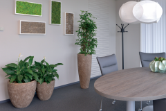 Office-plants-in-light-stone-planters-and-moss-art