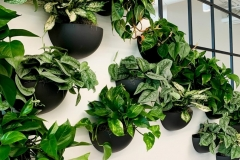 Office-wall-plants-Devant-Art