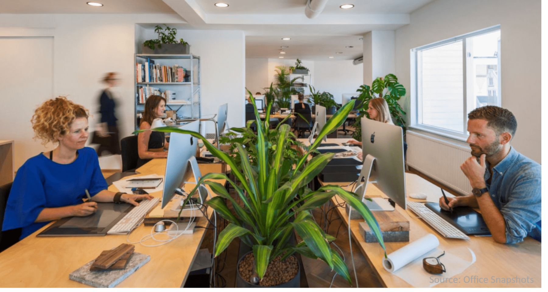 Desk-plants-between-destks