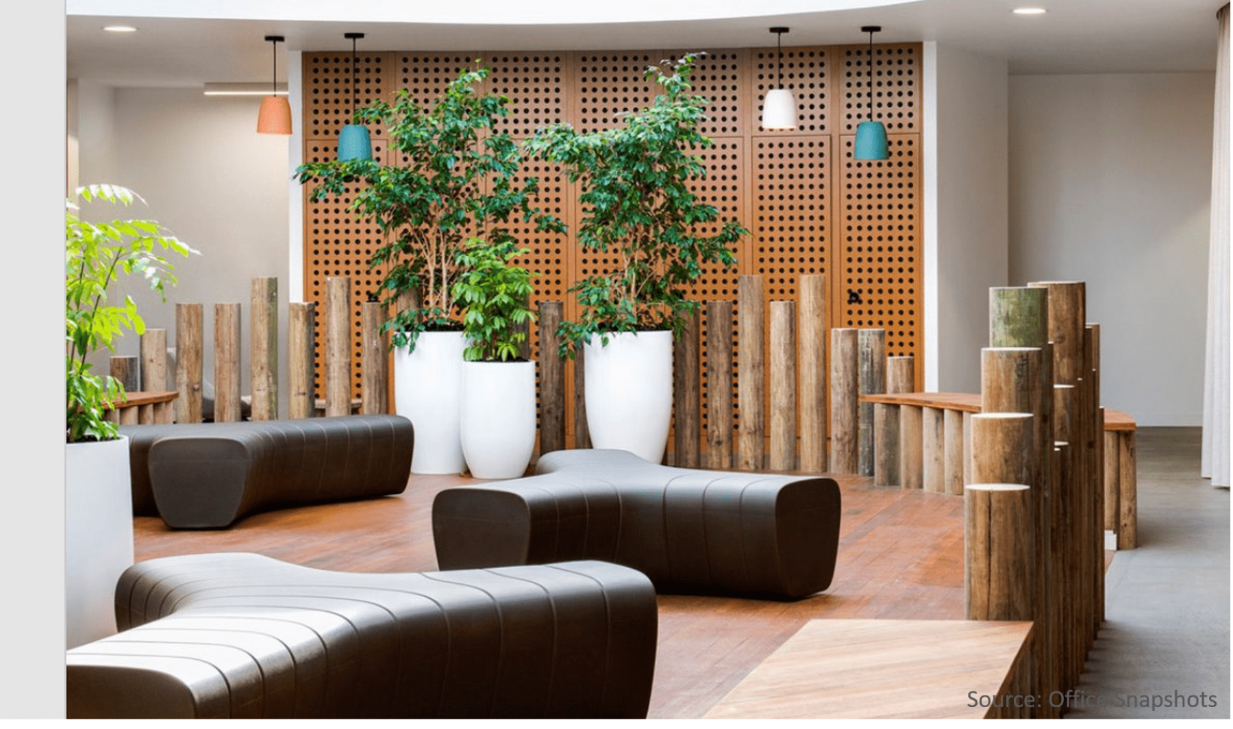 Large-tall-white-planters-large-office-trees