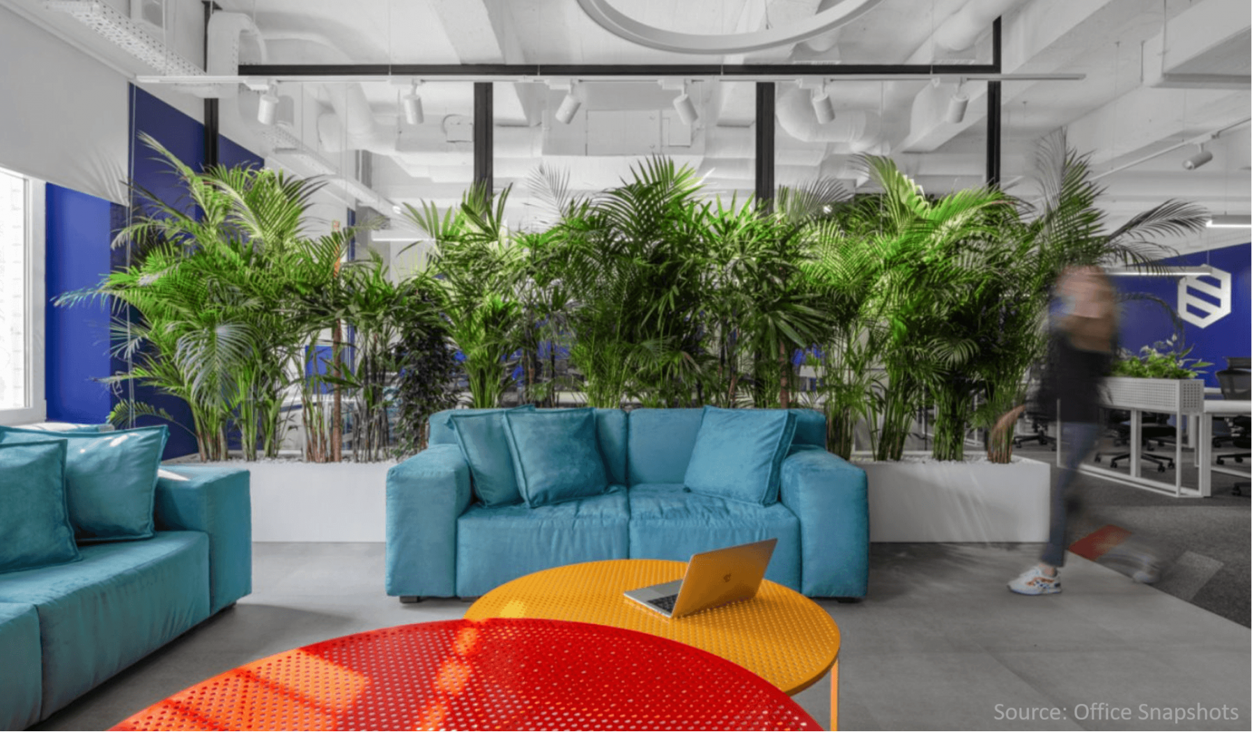 Wall-of-larg-palm-plants-in-contemorary-office-space