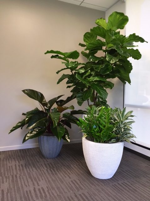 Service for existing interior plants