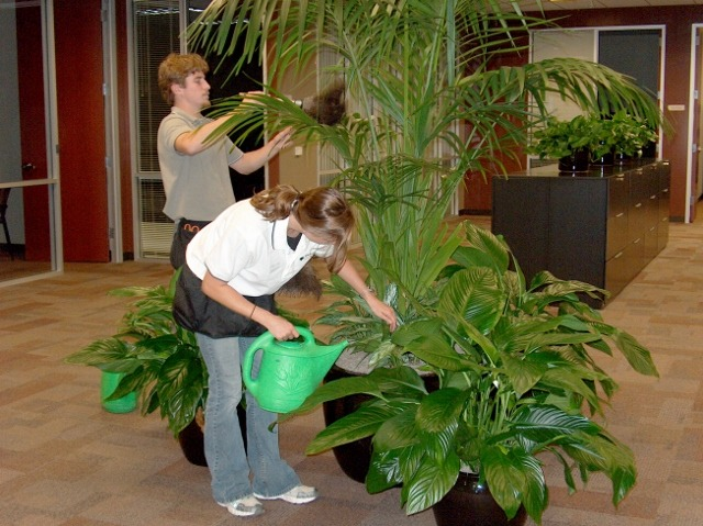 indoor Plant care techs, Westlake Village