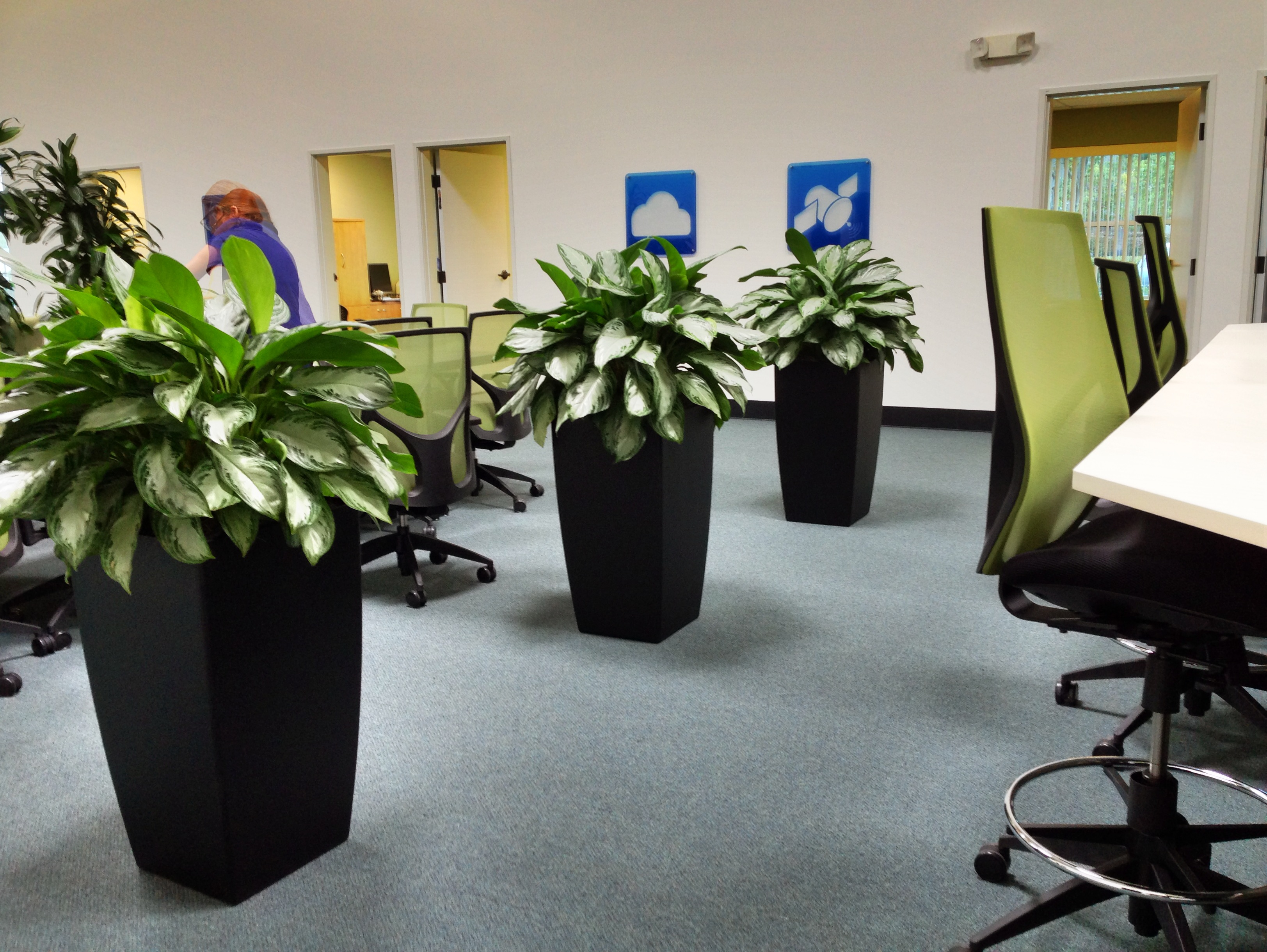 Plants For The Professional Office