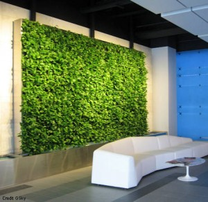 Vertical, live green wall