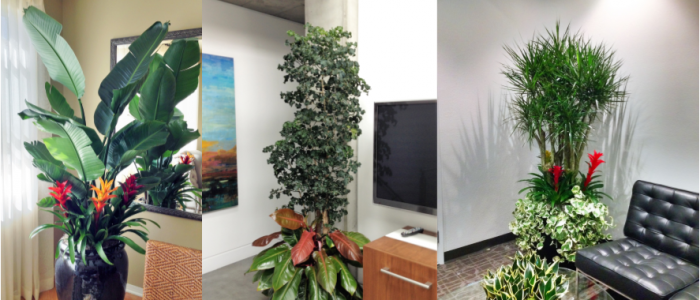 Interior plant service for the professional office for Indoor plant maintenance