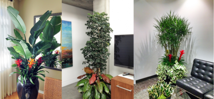 Oxnard indoor plant service and Interior plant maintenance