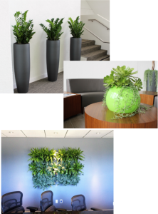 Contemporary plant collage