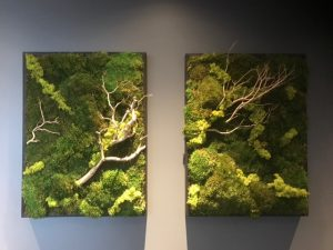 Moss Wall Art Interior Plants Plant Rental Plant