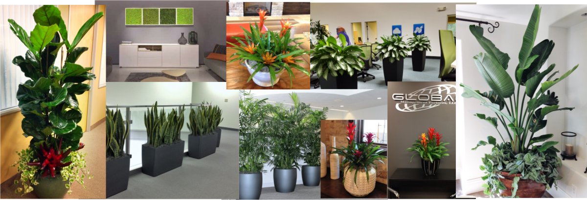 All This Is Backed By Our Exclusive 9 Step Plant Care System, Easy Plant  Rentals And Friendly Professional Interior Plant Maintenance People You Can  Count ...
