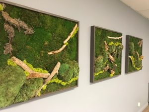 ... 3 Piece Moss Wall Art With Driftwood, Pond Moss, And Green Sheet Moss