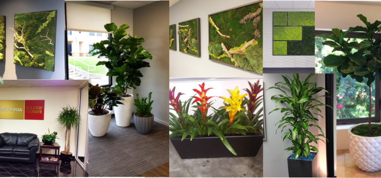 Plant rental, Camarillo
