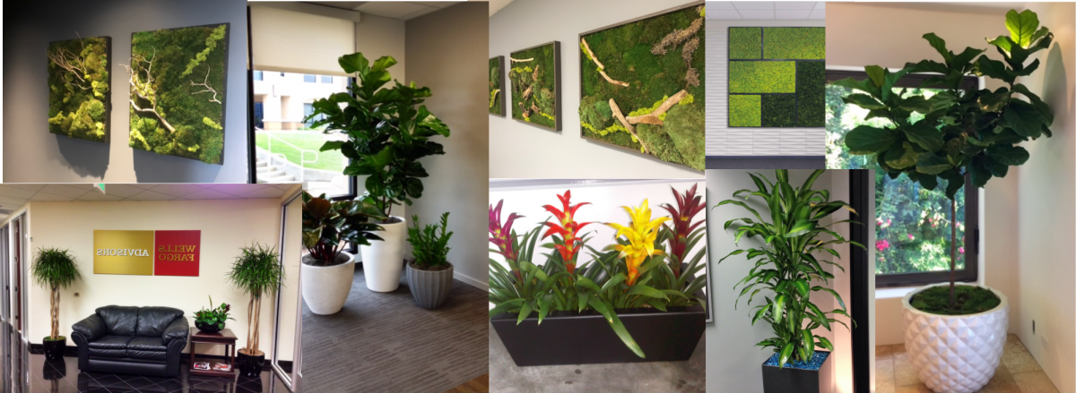 Interior Plants, Rental, Design and Service