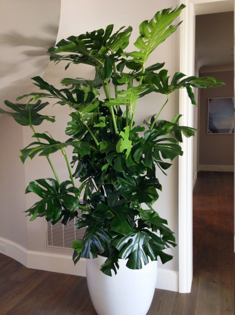 Unique Plants, Plant Rental, Plant Service