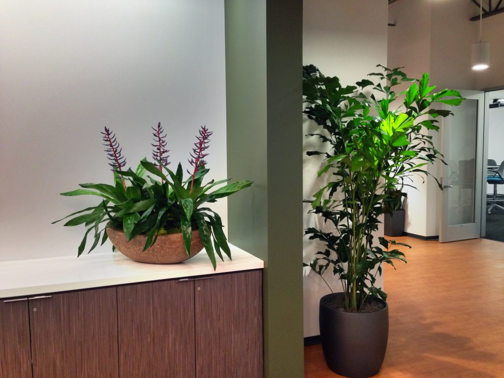 Lobby Plants, Reception area with flowers and large office plant