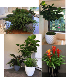 Interior Plants, Service, mainteance, los angels, landscapes, office