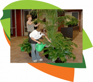 Plant rental, plant service, office plant