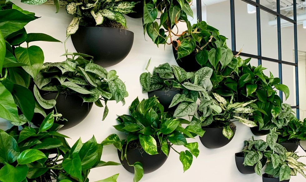 Interior plant leasing, office plants, wall plants, indoor plant service near me.