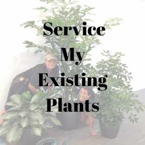 Interior Plant Service for exisitng plants