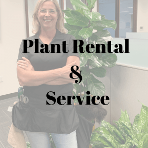Office Plant Rental and Serice