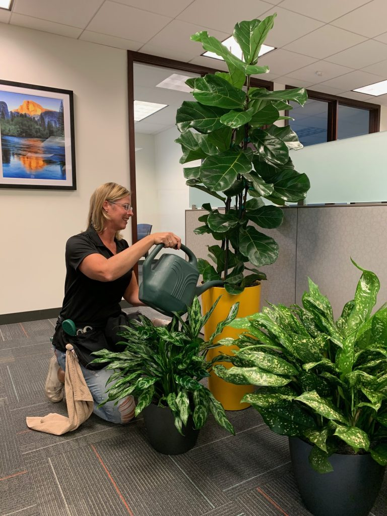 Plant Lady, Plant watering service, plant maintiance, interior plants, office plant