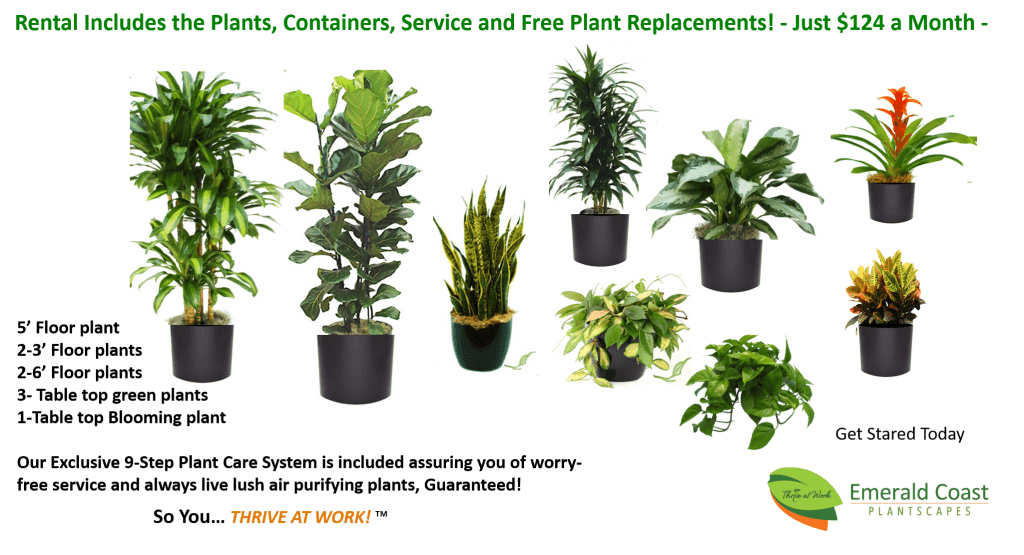 Cleaner Office Air with Easy Plant Rentals, Starting at Just $124/month. Office Plants, Office plant rental, interior plant maintenance service, plant rental coast, interior plant design