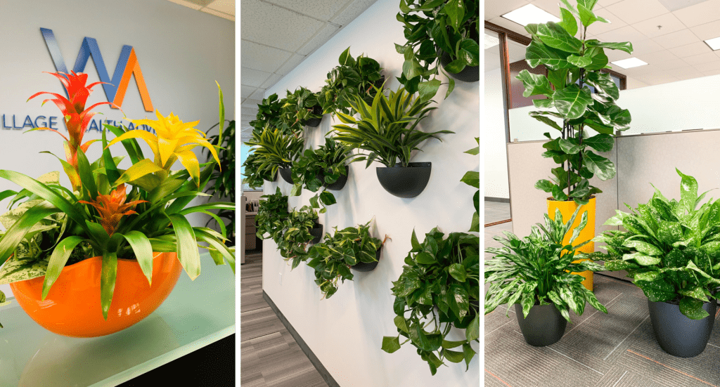 Easy plant rental and service packages. A better way to do office plants
