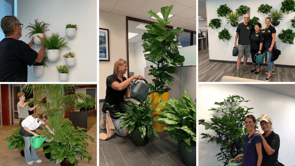 These plant techs come with your plant rental service.