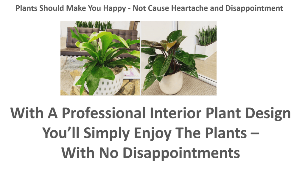 With A Professional, Personalized Interior Plant Design You'll Simply Enjoy The Plants Without the Disappointment