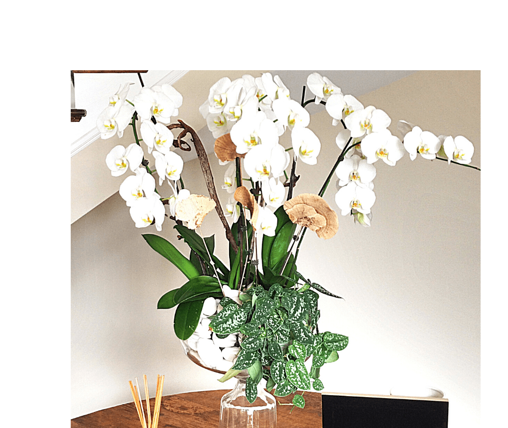 Orchid delivery. Orchid arrangement in glass vase