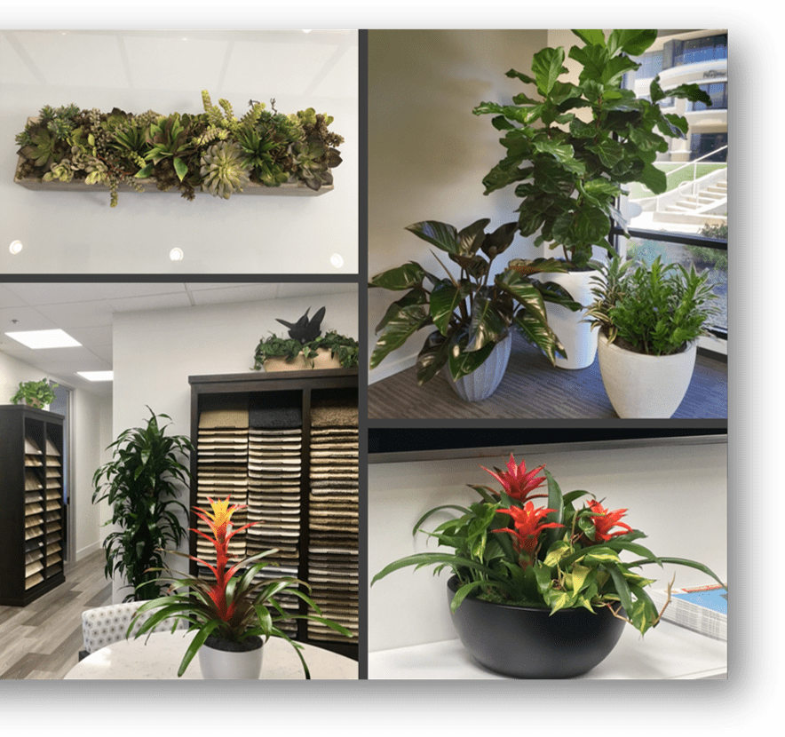 Interior office plant rentals and service