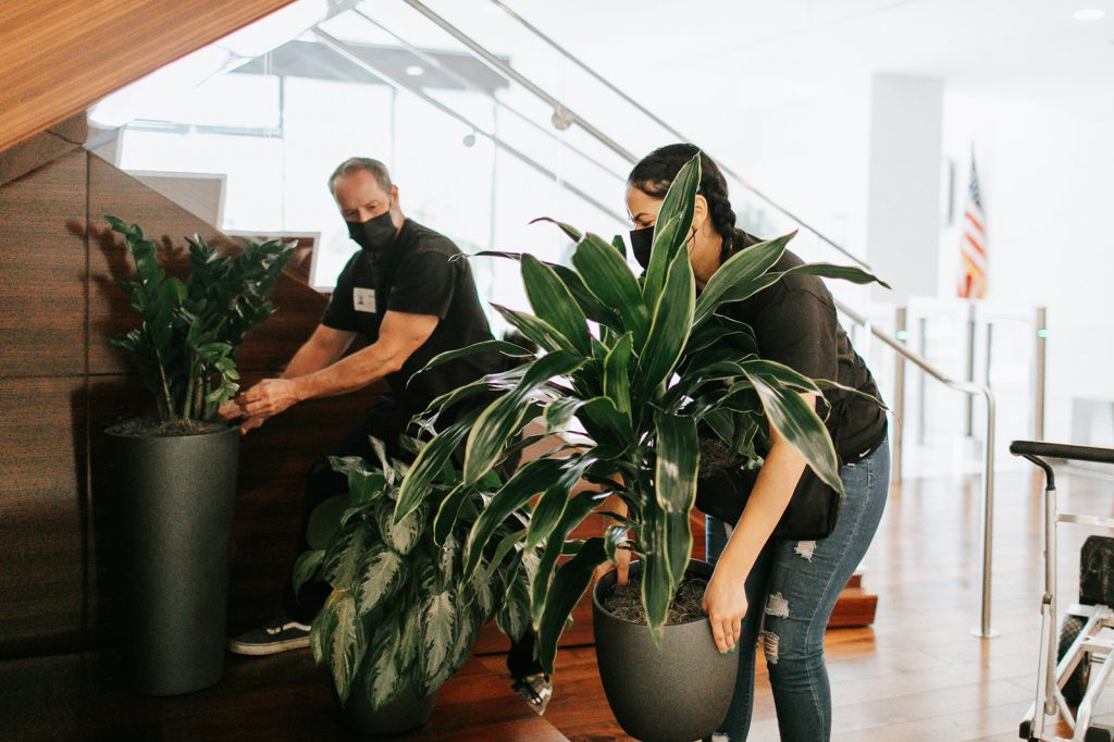 Interior plant delivery and installation of indoor landscapes